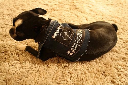 Death Metal Dog